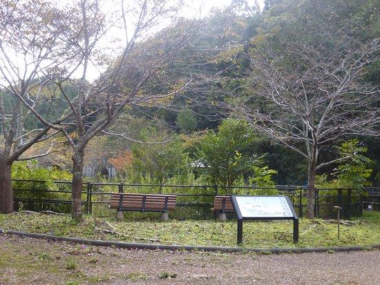 Uwajima, Nhật Bản: 園内風景