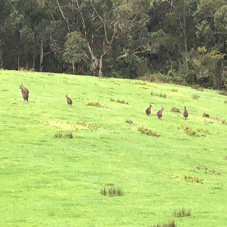 Wattle Hill, Austrália: photo0.jpg
