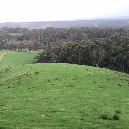Wattle Hill, Austrália: photo2.jpg