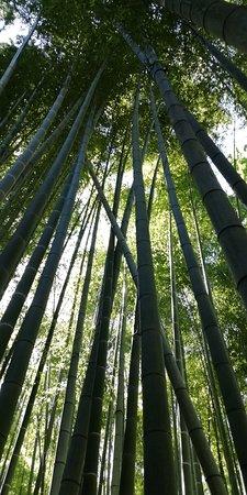 Hokoku-ji Temple Bamboo Grove