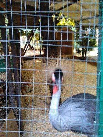Zoo in Sochi: IMG_20181013_102955_large.jpg