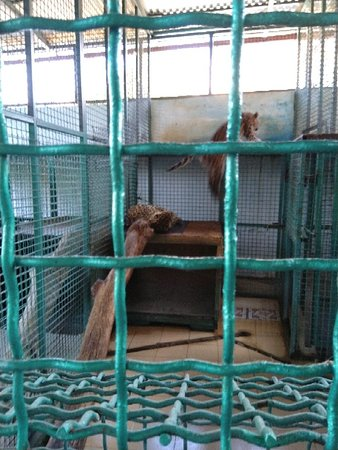 Zoo in Sochi: IMG_20181013_103049_large.jpg