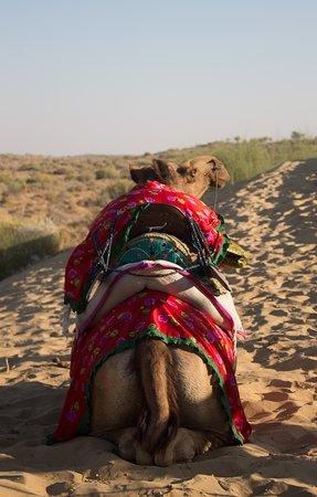 Ba's Desert Safari