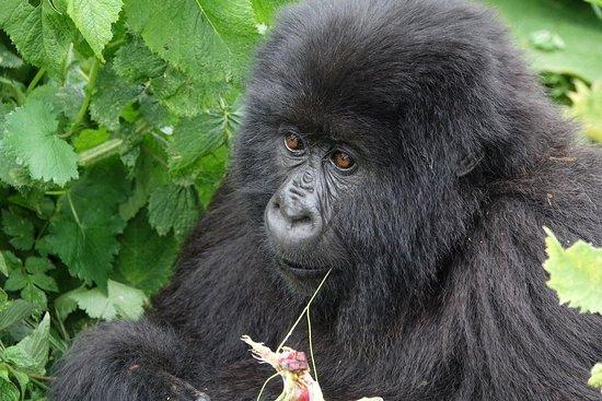 Rwanda Eco Company and Safaris