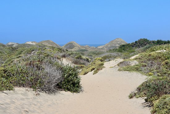 Ano Nuevo State Reserve: This is the trail for part of the hike.