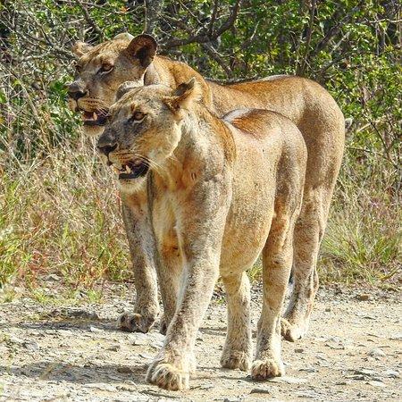 Heritage Day Tours & Safaris: photo5.jpg