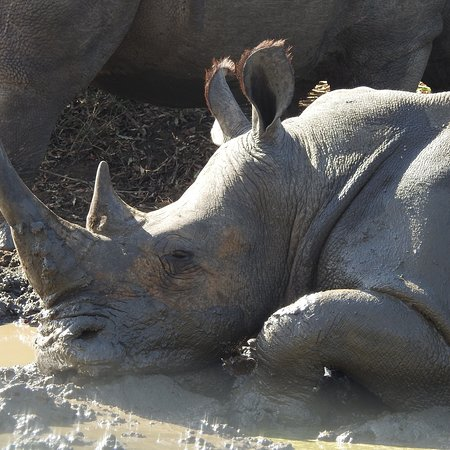 Heritage Day Tours & Safaris: photo6.jpg