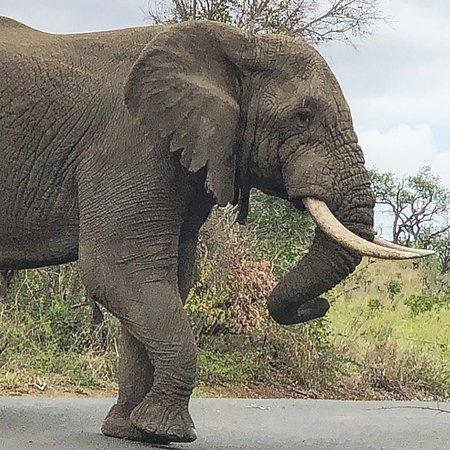 Heritage Day Tours & Safaris: photo8.jpg