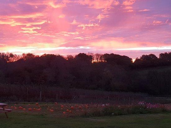 Horam, UK: Early morning skies over lovely plump punkins.