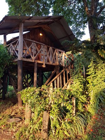 Kembu Cottages: Gorgeous leafy views from the treehouse at Kembu
