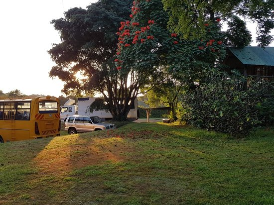 Njoro, Kenya: Gorgeous leafy views from the treehouse at Kembu