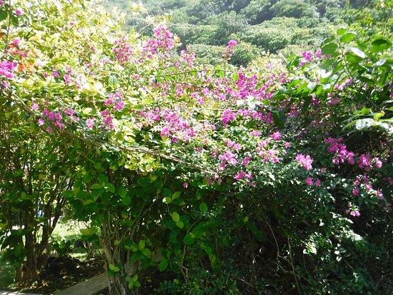 Ofu, Amerikansk Samoa: Gardens at Vaoto Lodge