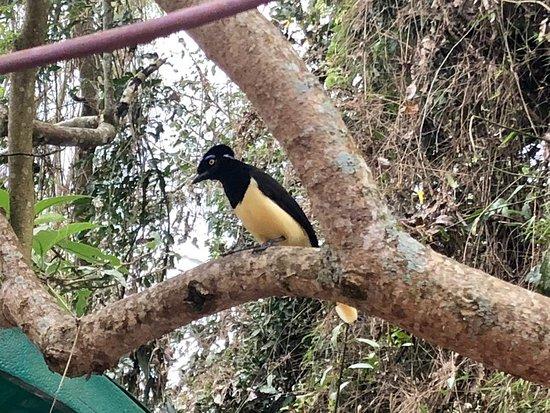 Parque Nacional Iguazú: IMG-20180919-WA0133_large.jpg