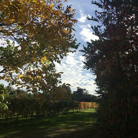 Shoreham, UK : The Mount Vineyard