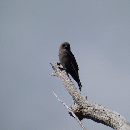 Coningham, Australia: photo4.jpg