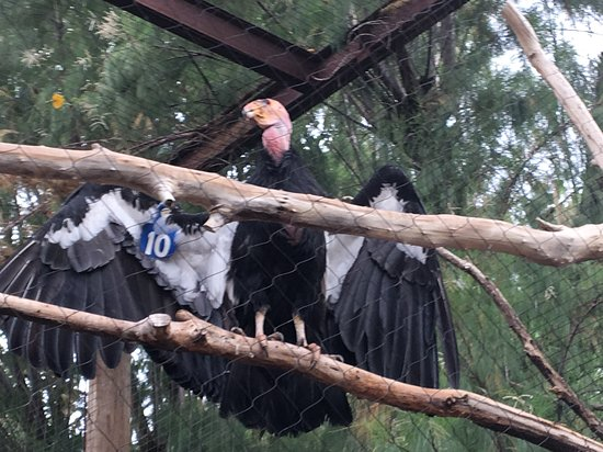 凤凰城动物园照片