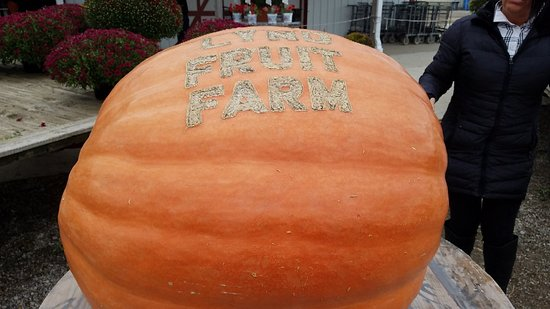 Pataskala, Ohio: Lynd's Fruit Farm