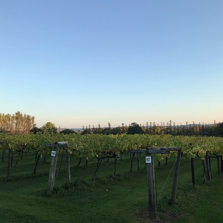 Llanerch Vineyard Tours