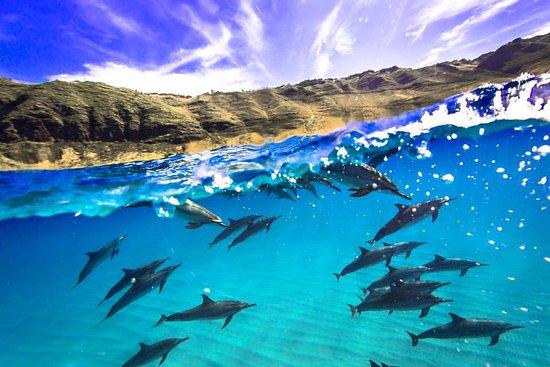 Iruka Hawaii Experiences