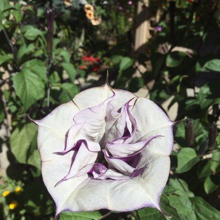 DanWalt Gardens: photo3.jpg