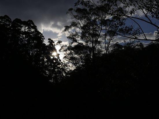 Four Nights in Madagascar's Eastern Highland Rain Forest