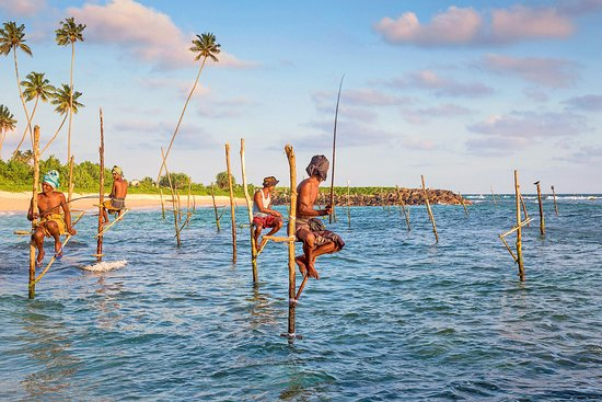 Katunayake, Sri Lanka: Catching Fishing in Srilanka