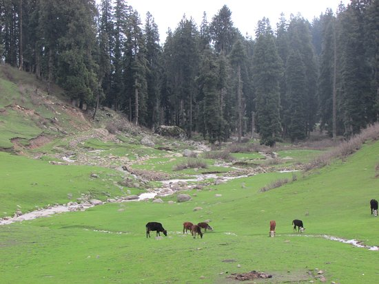 Manali Picnic Spot and Camps