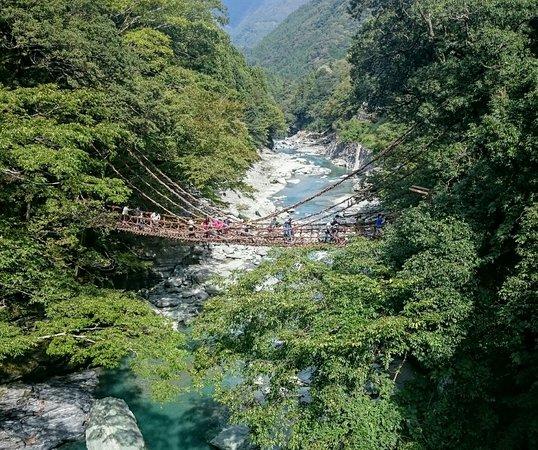 Iya Kazura Bridge: 幼稚園ぐらいの女の子も渡っていました。