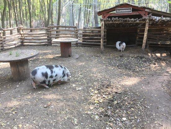 Veresegyház, Magyarország: Állatsimogató