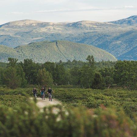 Dombas, Norge: Moose safari Dovrefjell