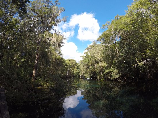 Chiefland, FL: Spring Flow leading to Suwannee River