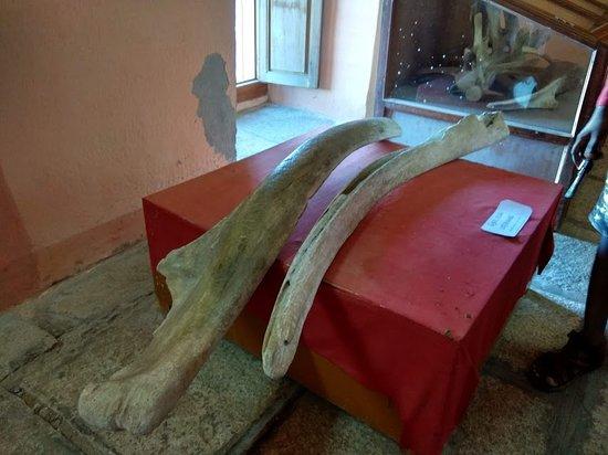 Tranquebar, الهند: Bone of whale