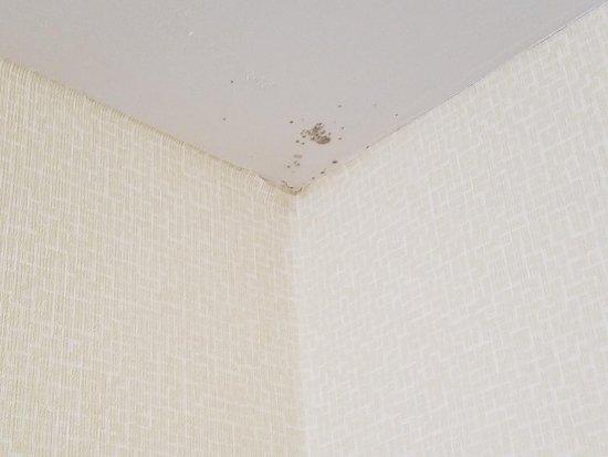 Hillsville, VA: Corner ceiling in bathroom