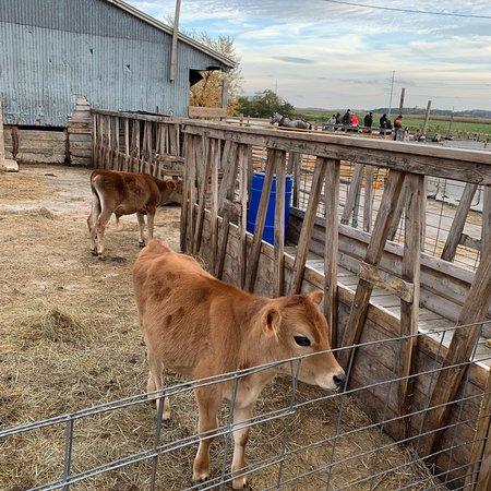 Treinen Farm: photo4.jpg