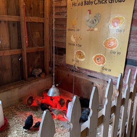Treinen Farm: photo7.jpg