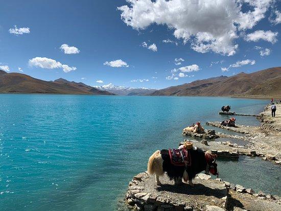 Tibet Travelers: Yamdrok