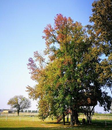 Villanterio, إيطاليا: Casetta sull'albero in autunno 