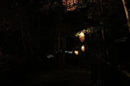 Foresta Lumina: hill path to the bridge