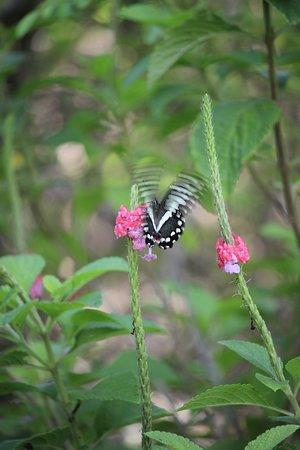 Chinteche, Malawi: tha butterfly again