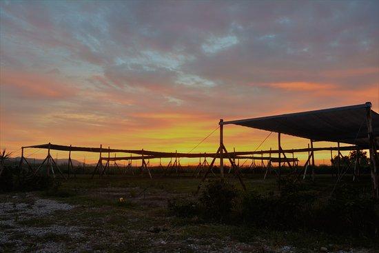 Bilde fra Torrenova