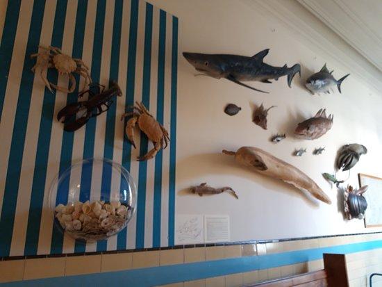Aan De Muur : Zeedieren aan de muur foto van muzee scheveningen scheveningen