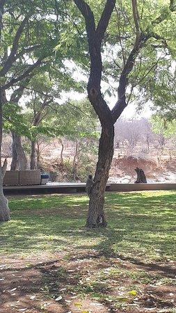 Klaserie Private Game Reserve, South Africa: 20181012_141920_large.jpg