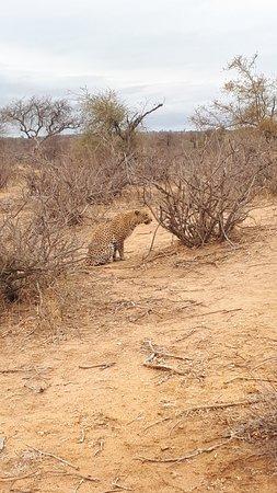 Klaserie Private Game Reserve, South Africa: 20181013_072143_large.jpg