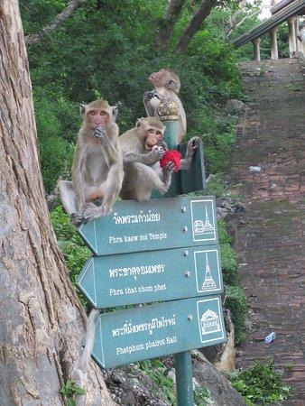 Khao Wang (Phra Nakhon Khiri Historical Park): Monkeys at the entrance