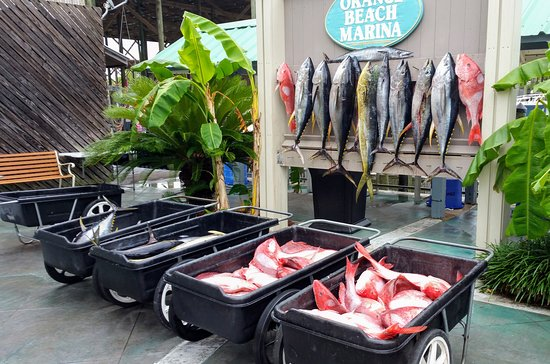 Intimadator Fishing Charters