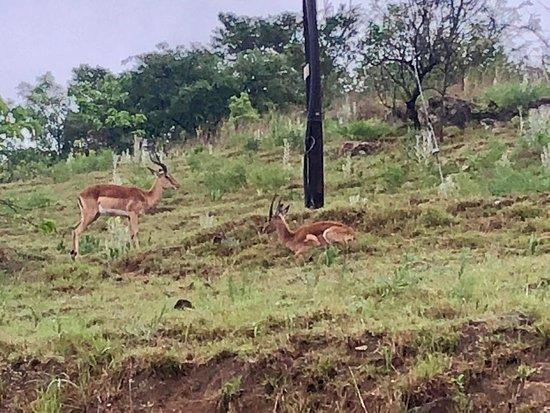 Piggs Peak, Swaziland: IMG-20181014-WA0007_large.jpg