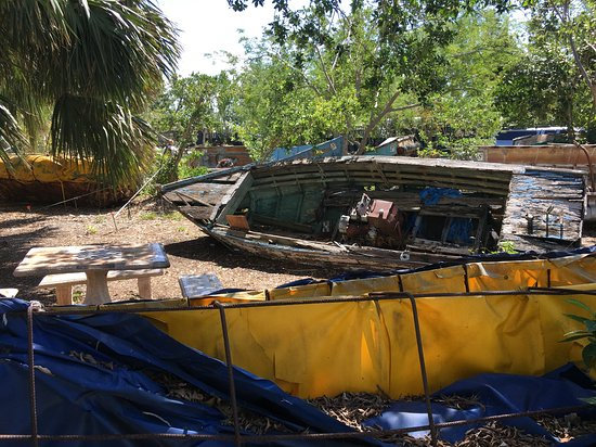 rotting wood and plastic boats picture of key west tropical forest rh tripadvisor com
