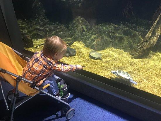 Virginia Aquarium Marine Science Center Turtle