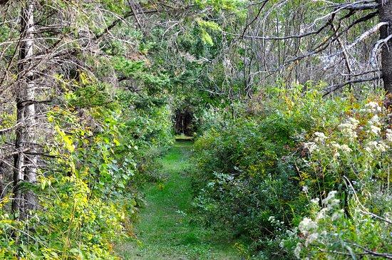 Clark's Sunny Isle Motel: Trail to the beach