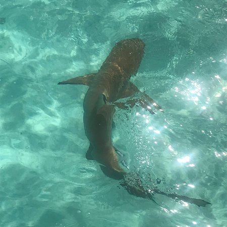 Hauru, Franska Polynesien: photo1.jpg